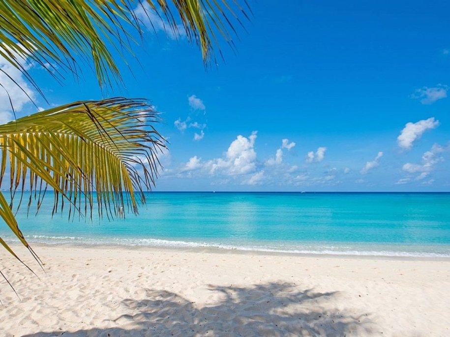 Картинки море пальмы белый песок
