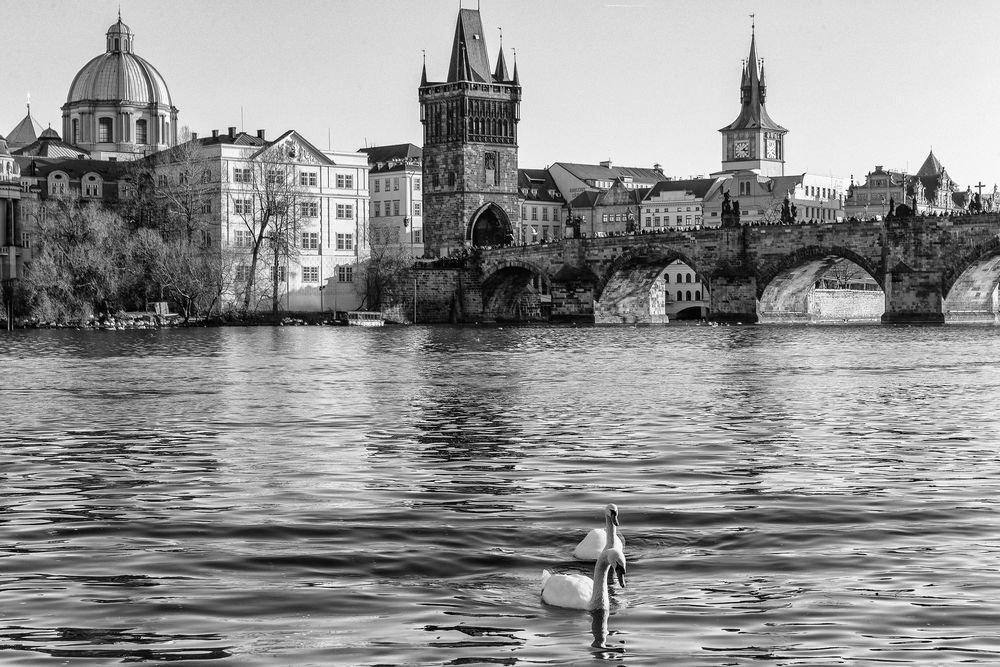 здесь переборщить черно белые фото картины италия города содержание кур-несушек для