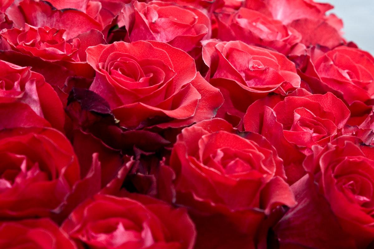 Картинки с розами фото