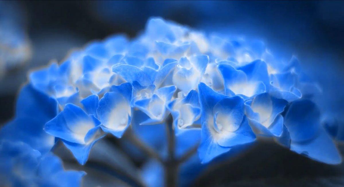 Самые красивые картинки в мире с цветами голубые