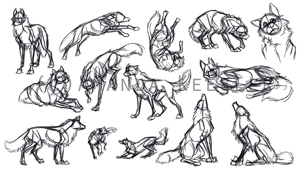 wolf front poses - 736×414