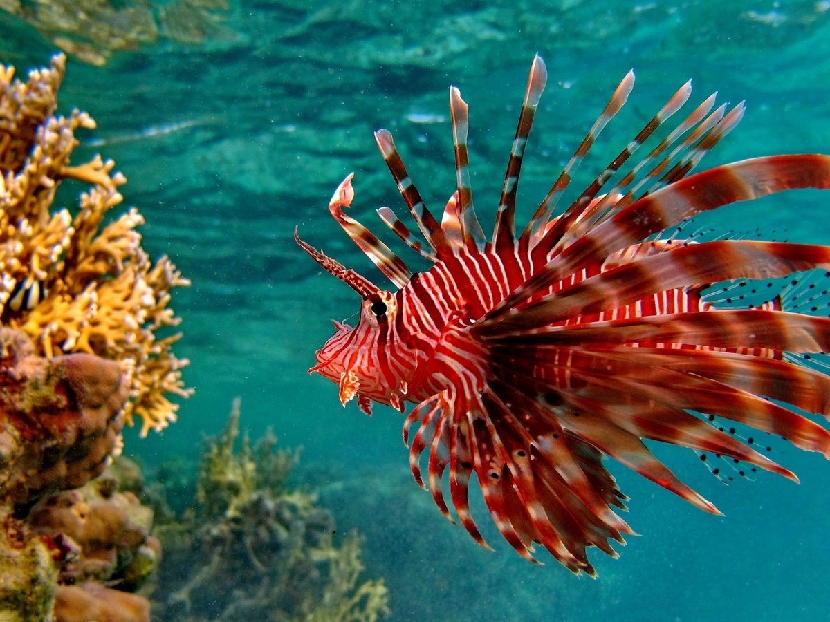 Рыбы фото красивые, открытка поздравления