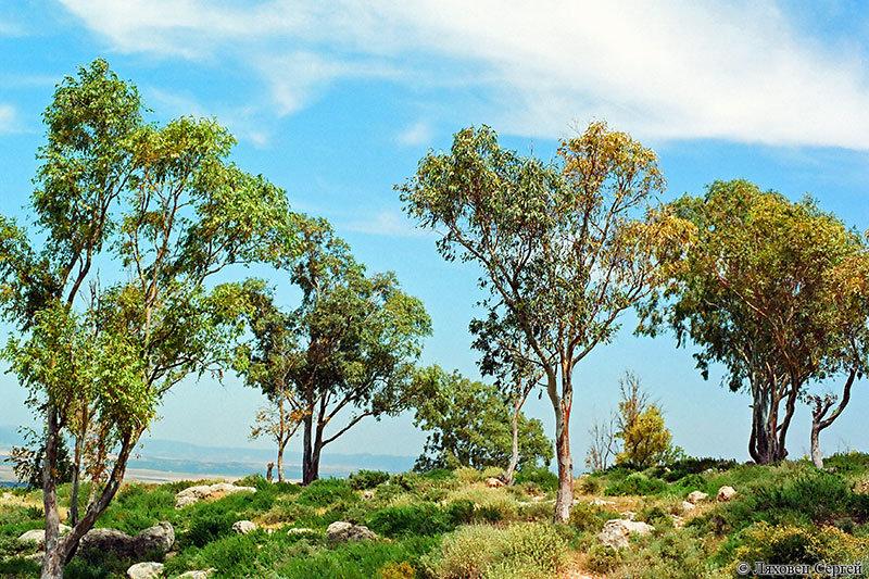 группу деревья туниса фото вот как