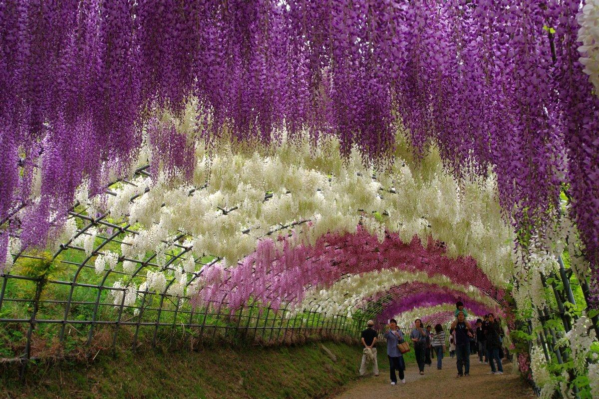 цветущие деревья мира фото его