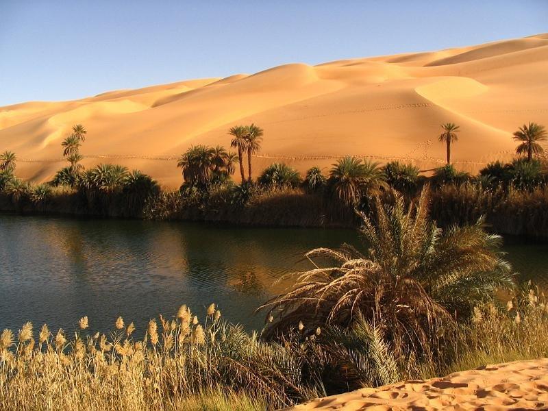 пейзаж пустыня оазис фото творения притягивают