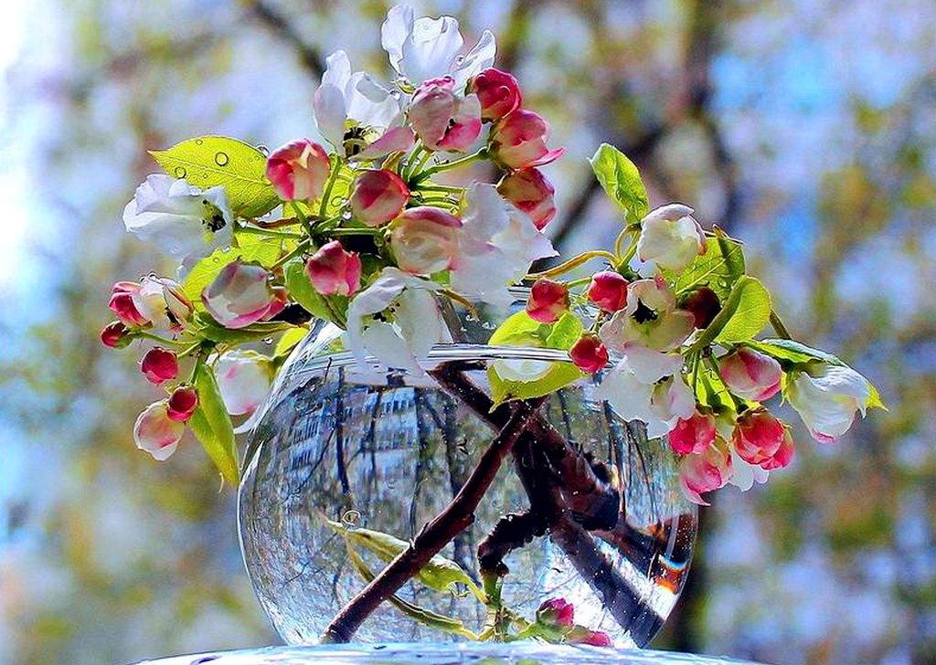 Картинки весна утро красота удачи, счастья