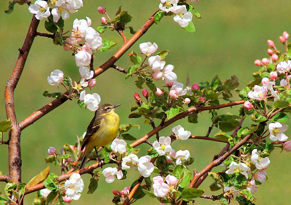 Картинка весна солнце птицы