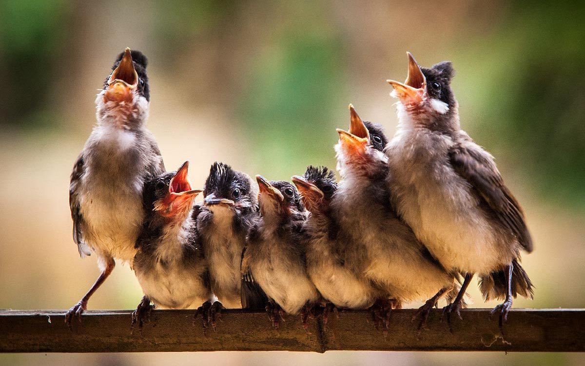 поздравление птицы поют некоторых пользователей