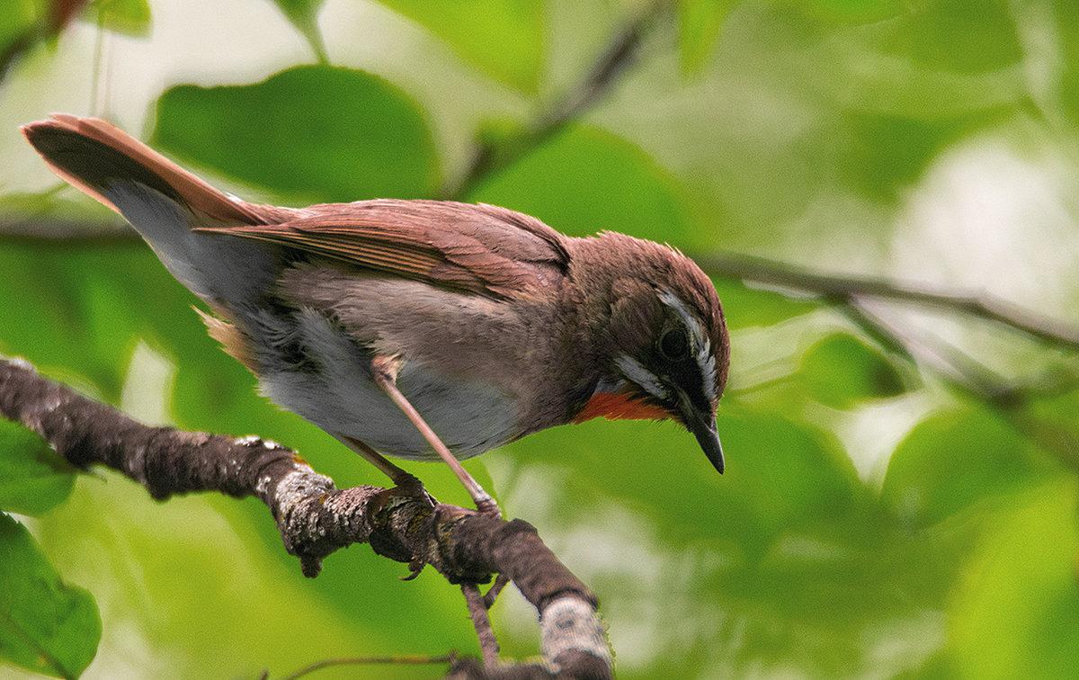картинки птиц нашего леса идеи фото дизайна