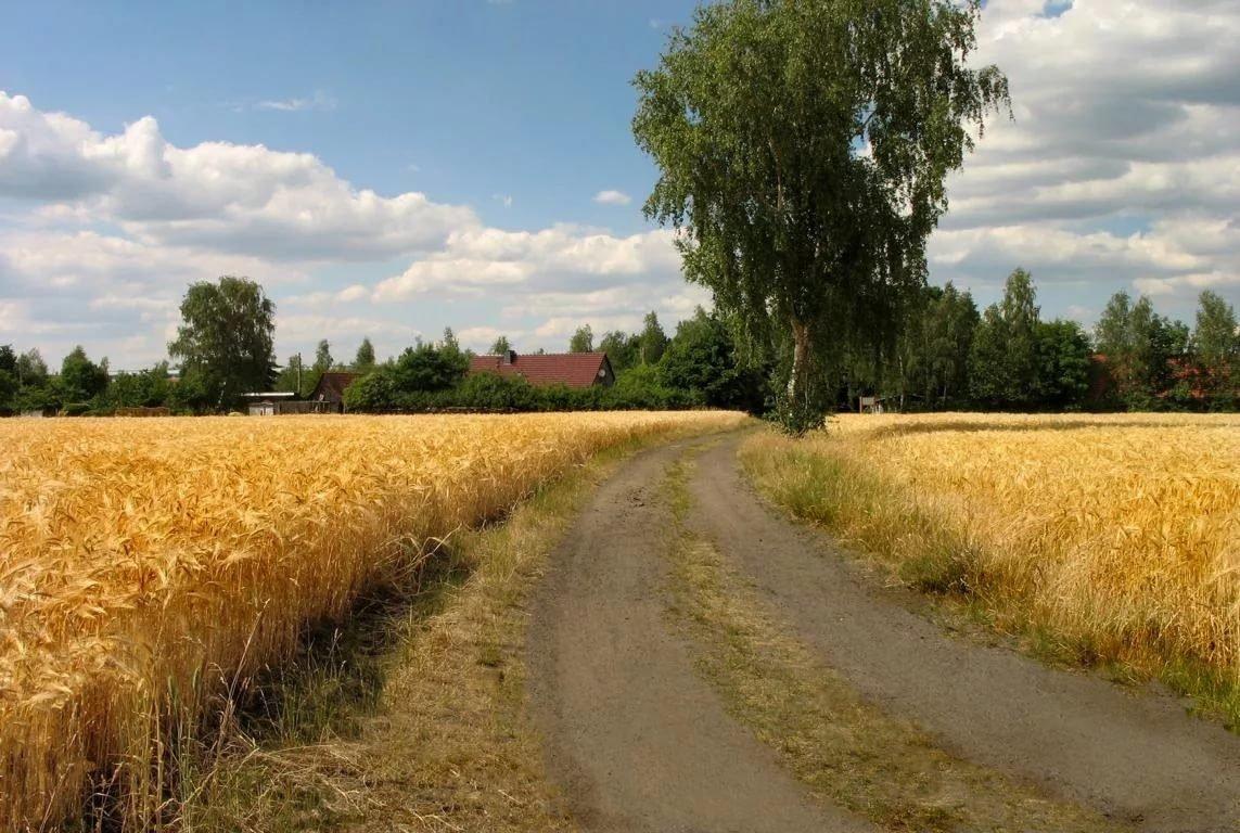 Картинки деревня поле