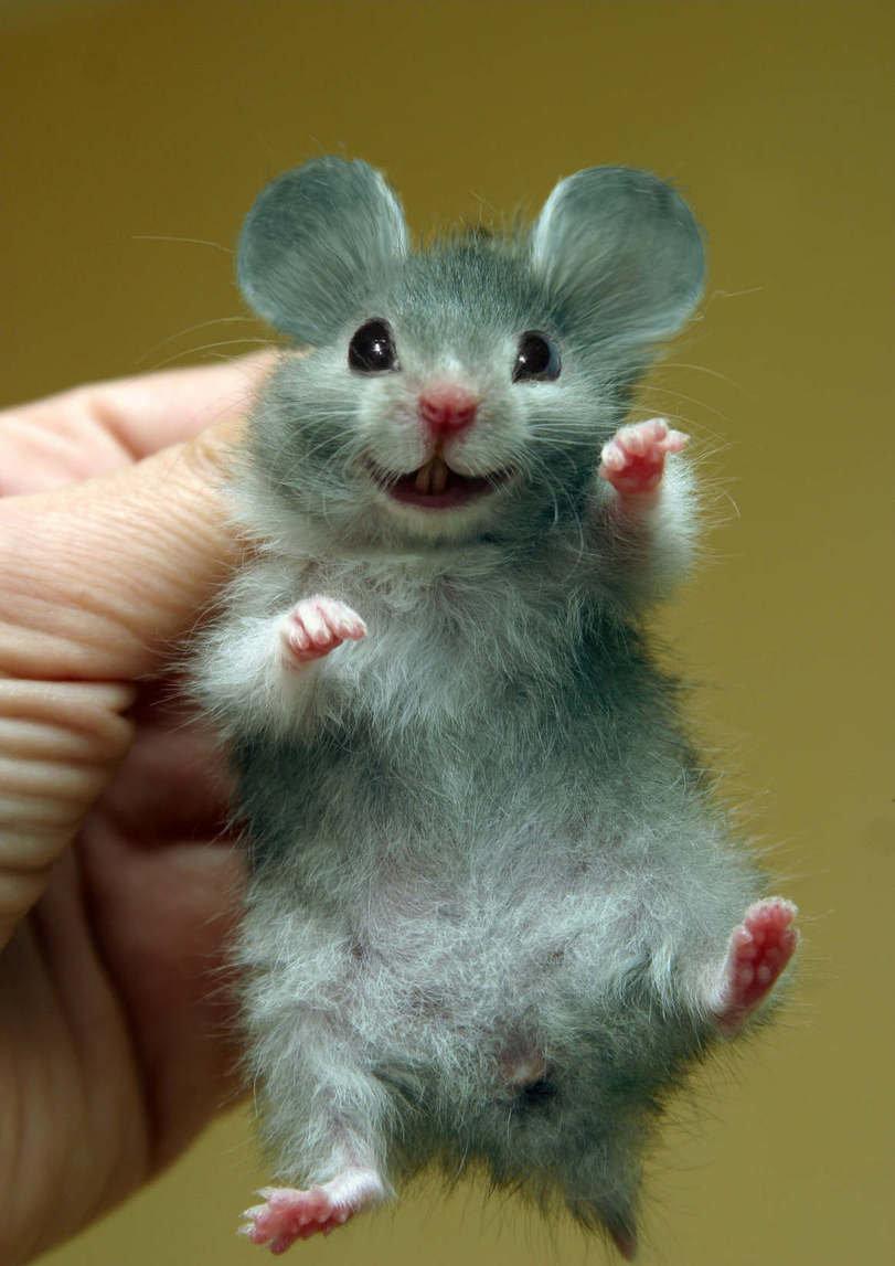 Картинка смешной мыши, открытку