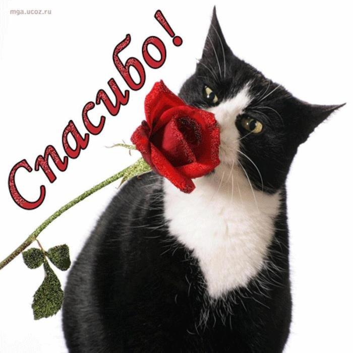 Картинки своими, картинки спасибо с котиками