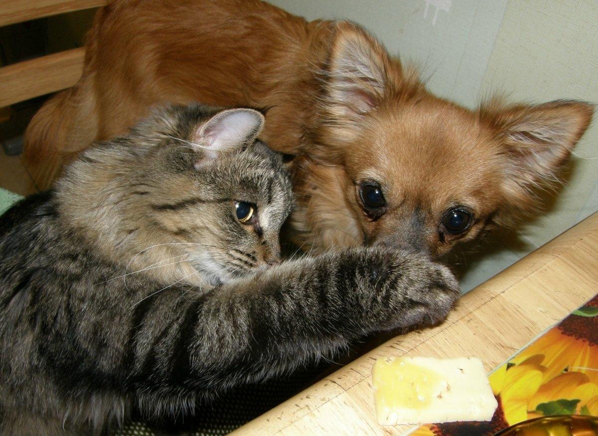 Картинки щенят и котят с надписями