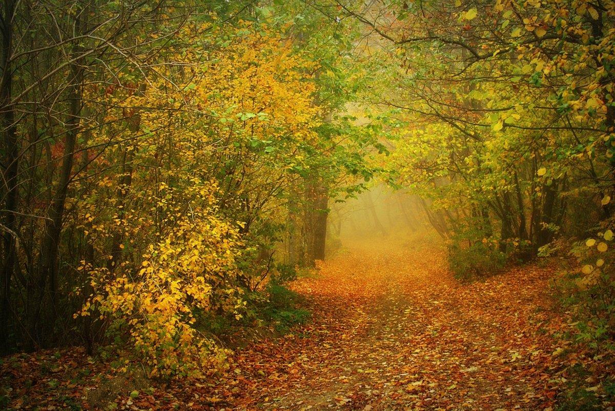 В сказочный туман...#арка #конкурс #красота #осень #природа #сказка #туман