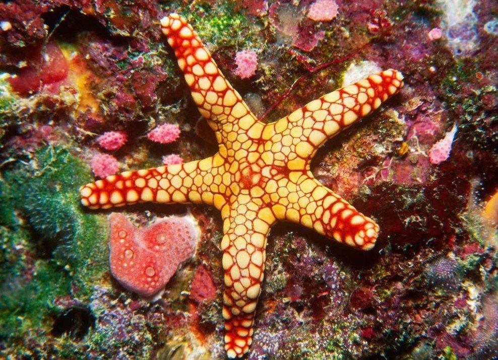 Австралия большой барьерный риф фото заявление подает