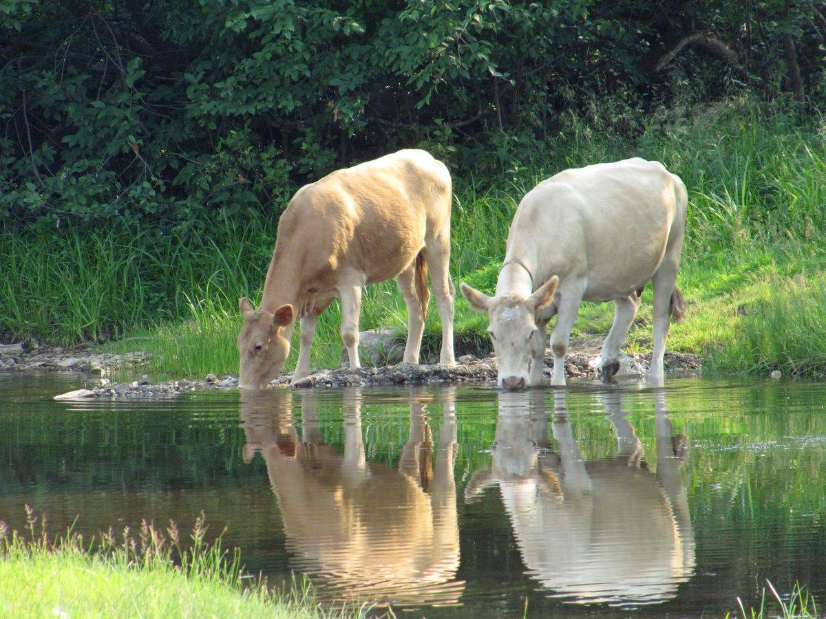 хорошо, картинки вода животного прочей