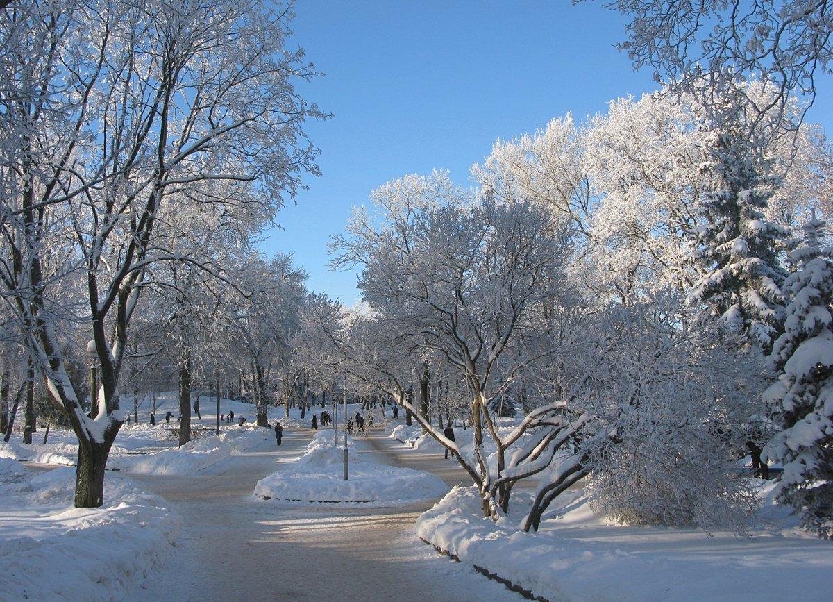 Картинки зимний парк