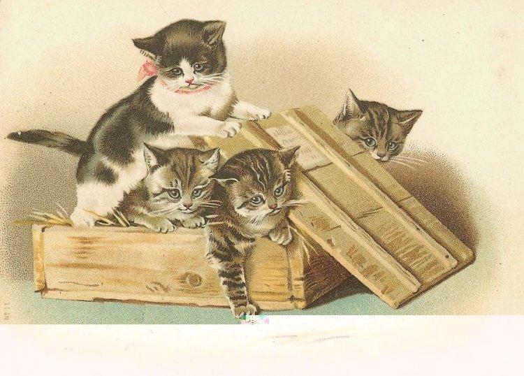 Старинные котики на открытках