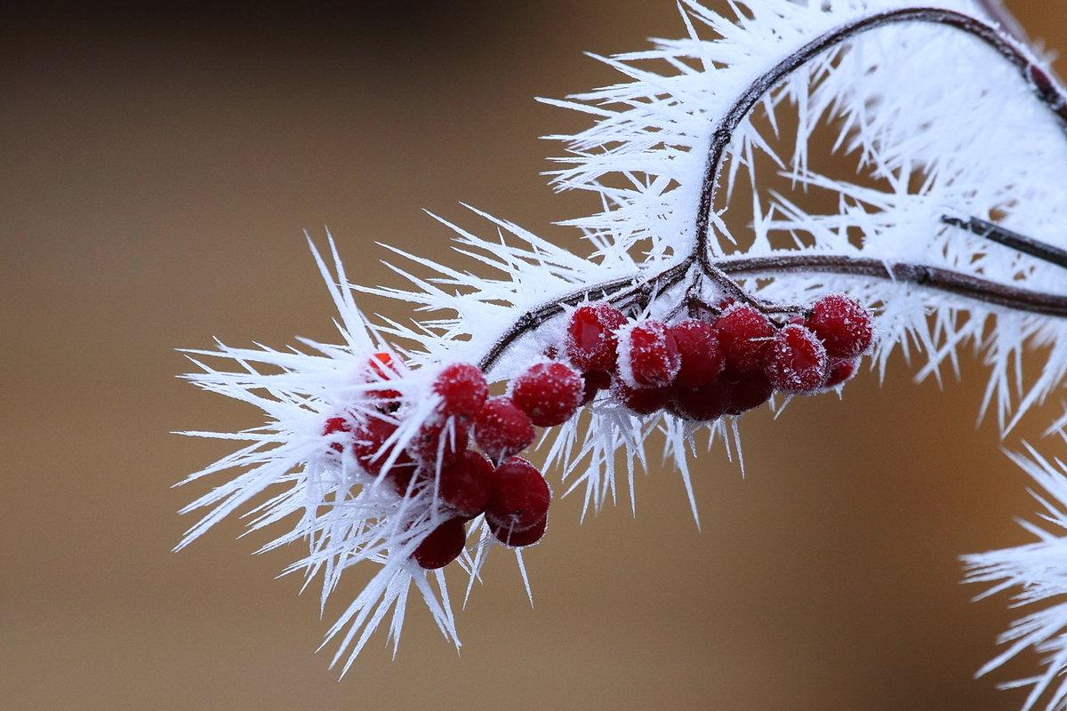 есть доброе утро с осенним морозом картинки видим
