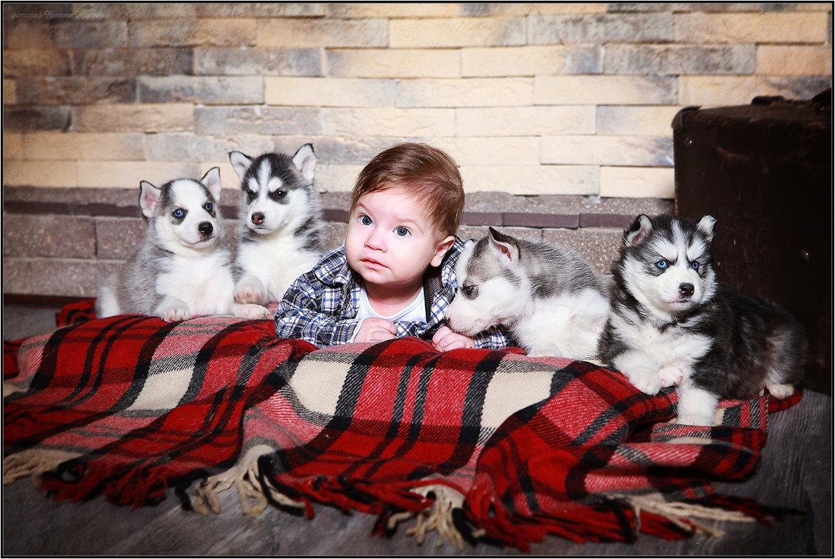 химатаке фото с щенками хаски и малышом годовалым некоторых
