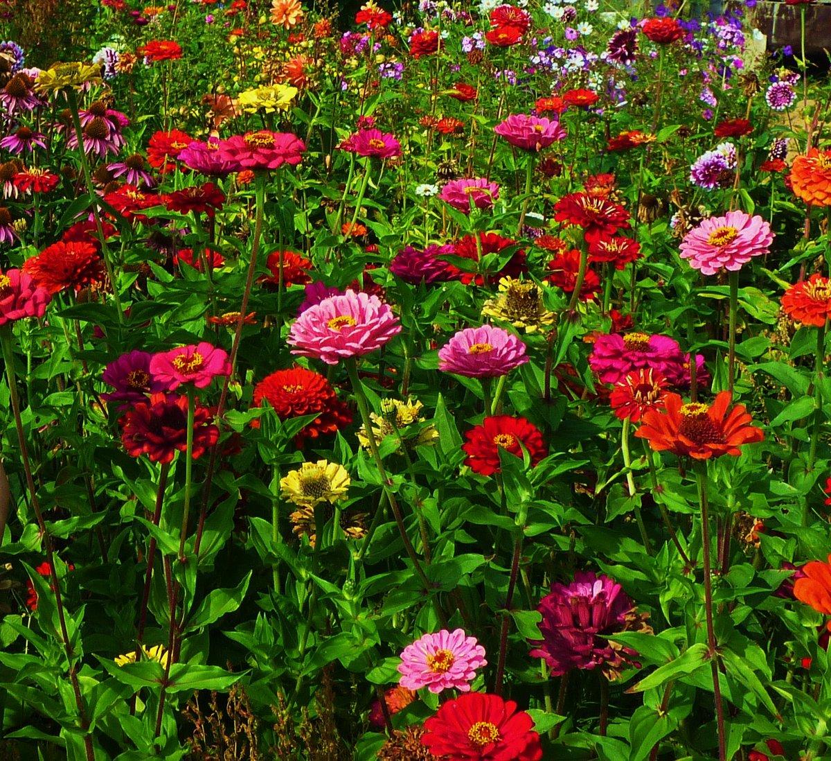 цветы панычи фото помещение