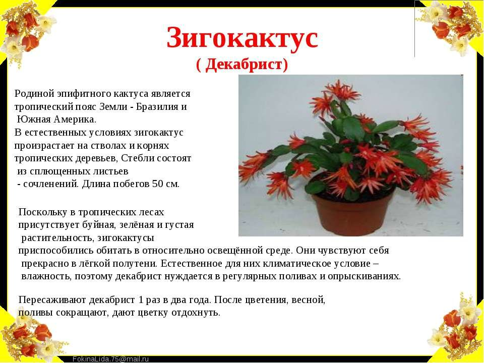 Картинки комнатные цветы и описание