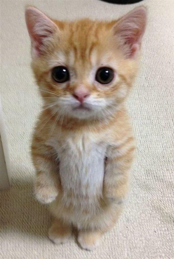 Картинки пожалуйста котик
