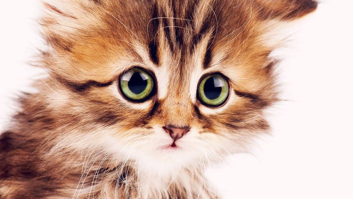 Картинки с красивыми котиками живыми, картинки надпись