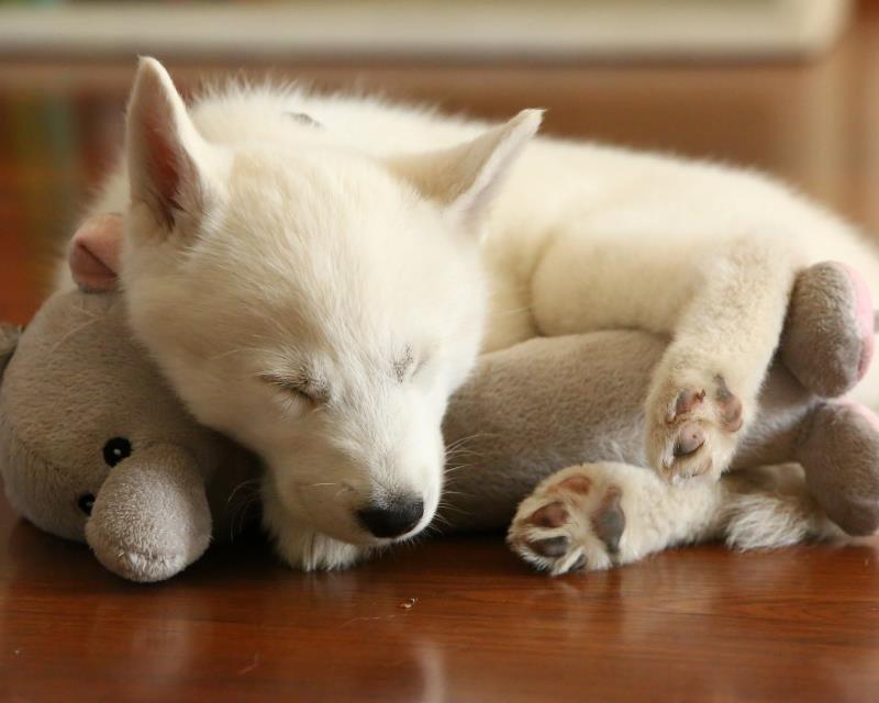 милые спящие животные фото просто