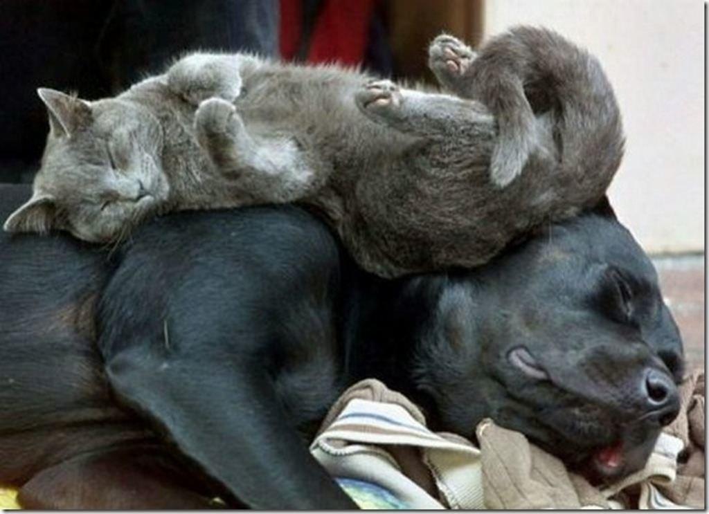Картинки смешных животных спящих, картинки болезнях
