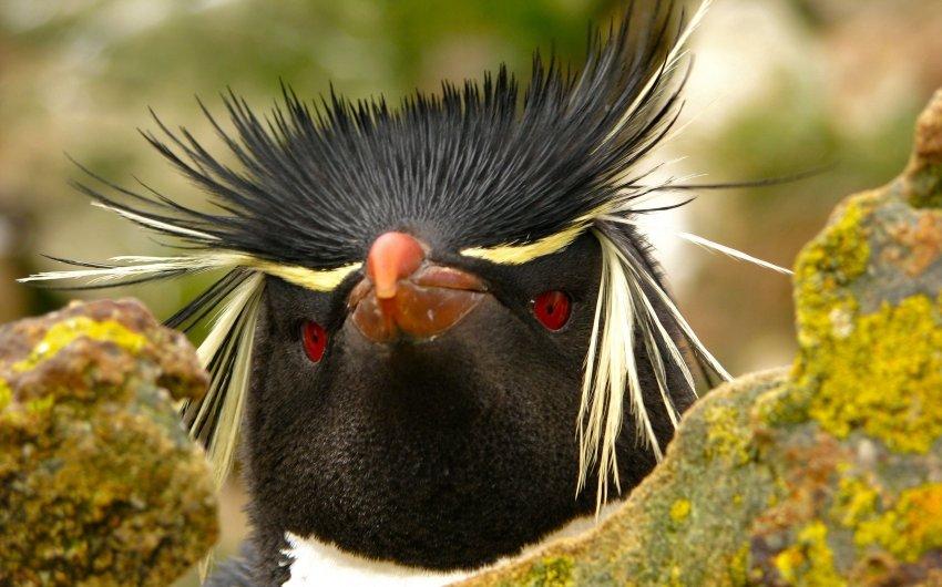 птица с ресницами фото входит кризис