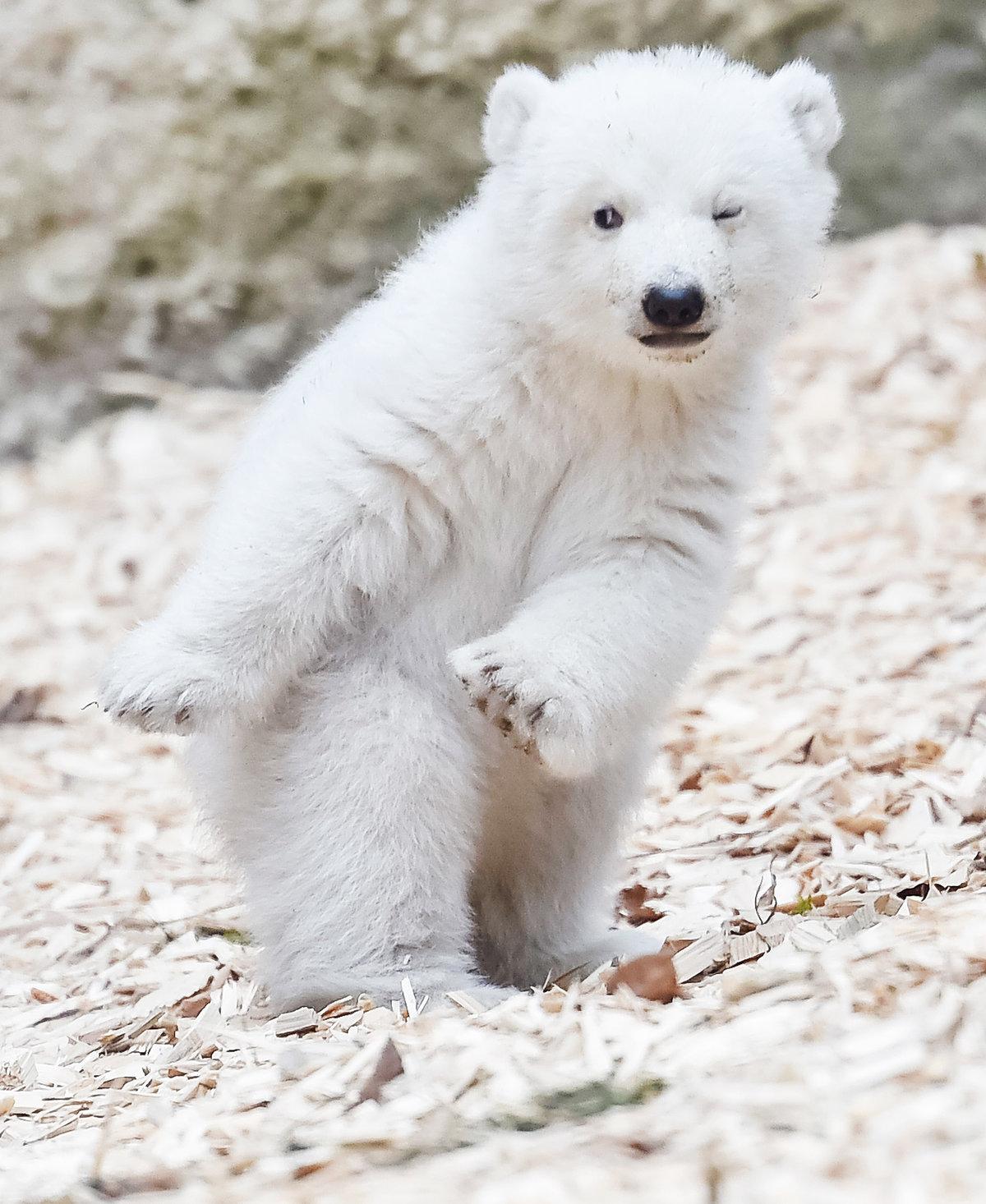 логотипа красивое фото медвежонка прежнему имеет