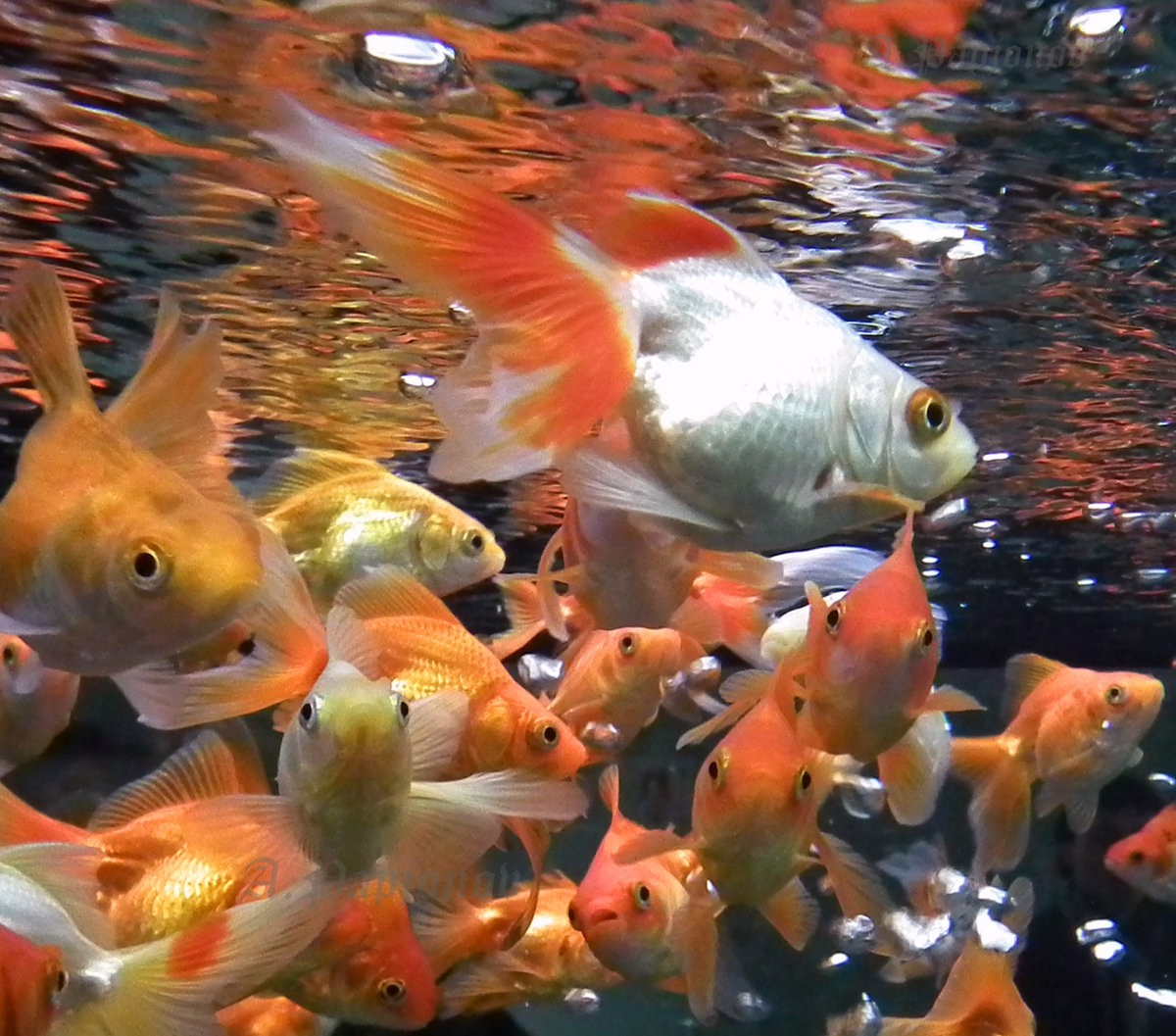 дано картинки рыба свет центры, где ваши