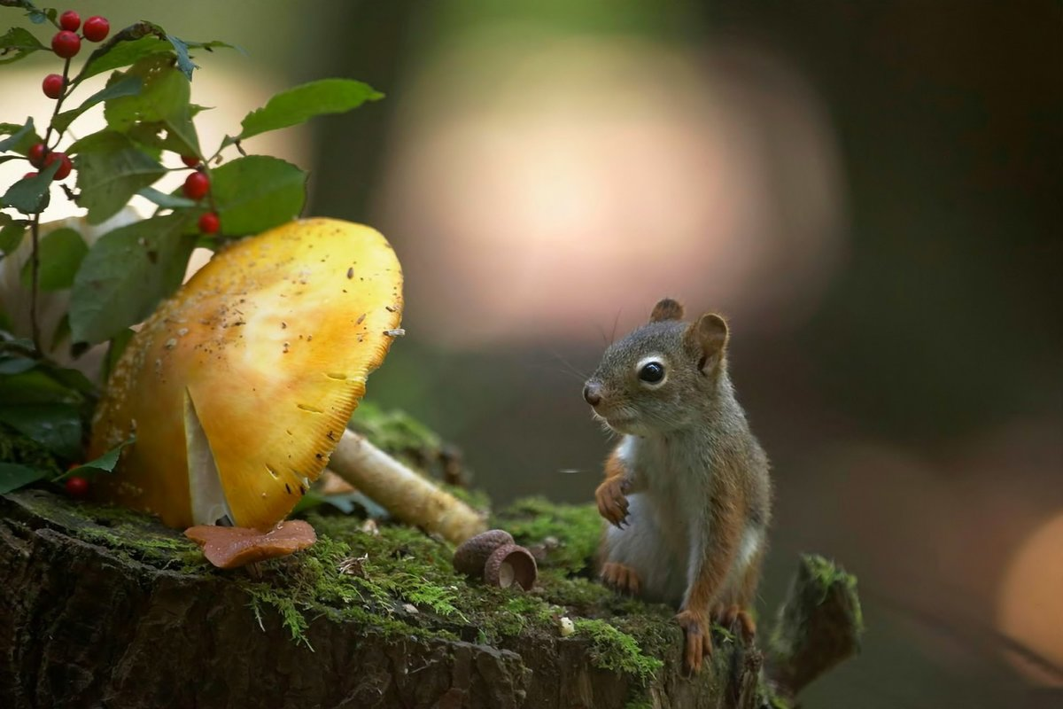 Прикольные картинки мотивация сова грибов в лесу нет тушканчик кабан, мышкой очень
