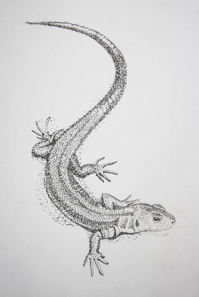 Рисунки ящерицы картинки