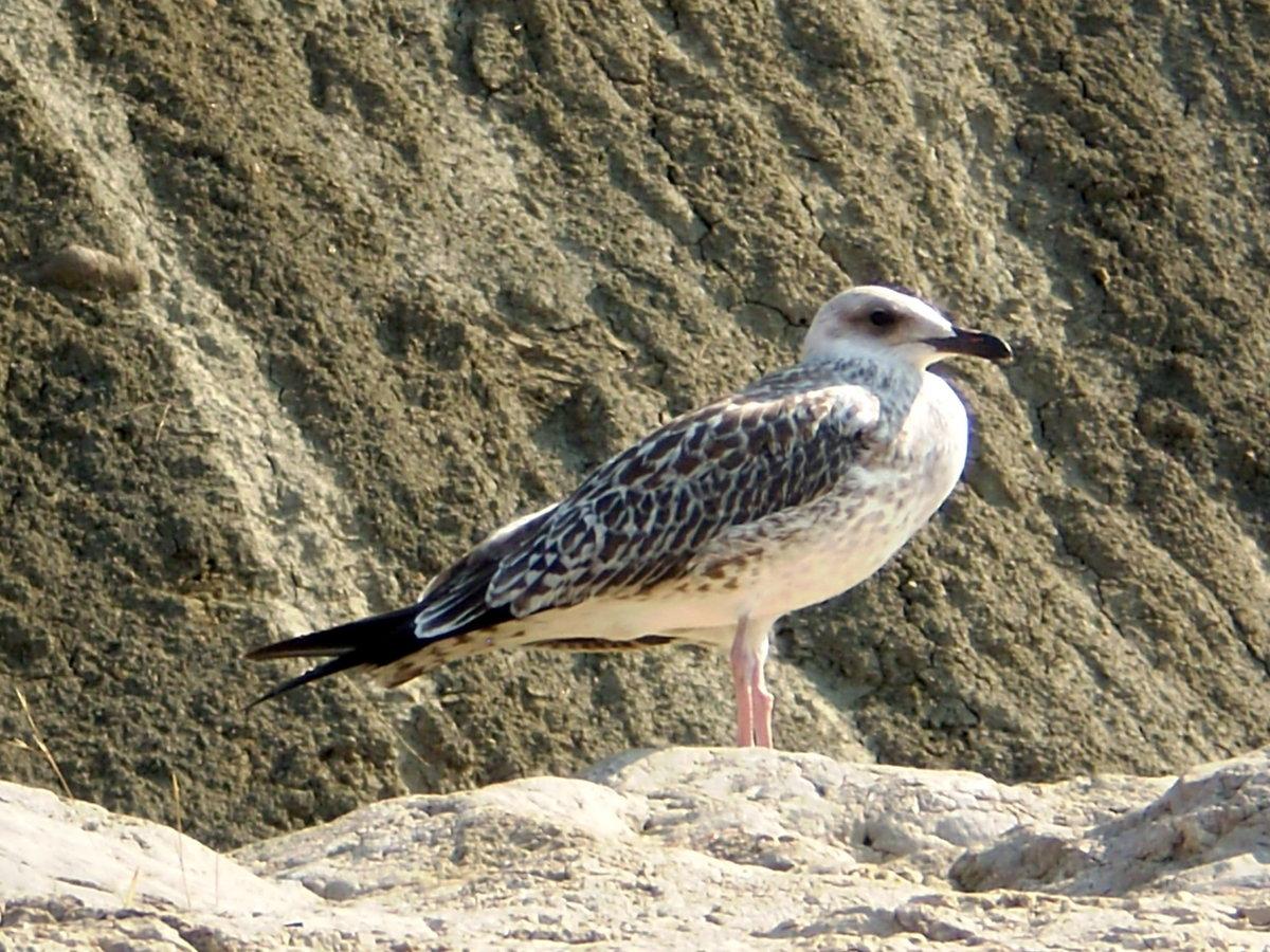 птицы крыма фото с названиями