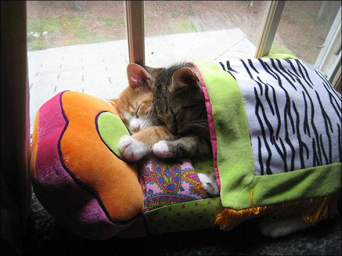 Фетра, прикольные картинки котики в кроватке