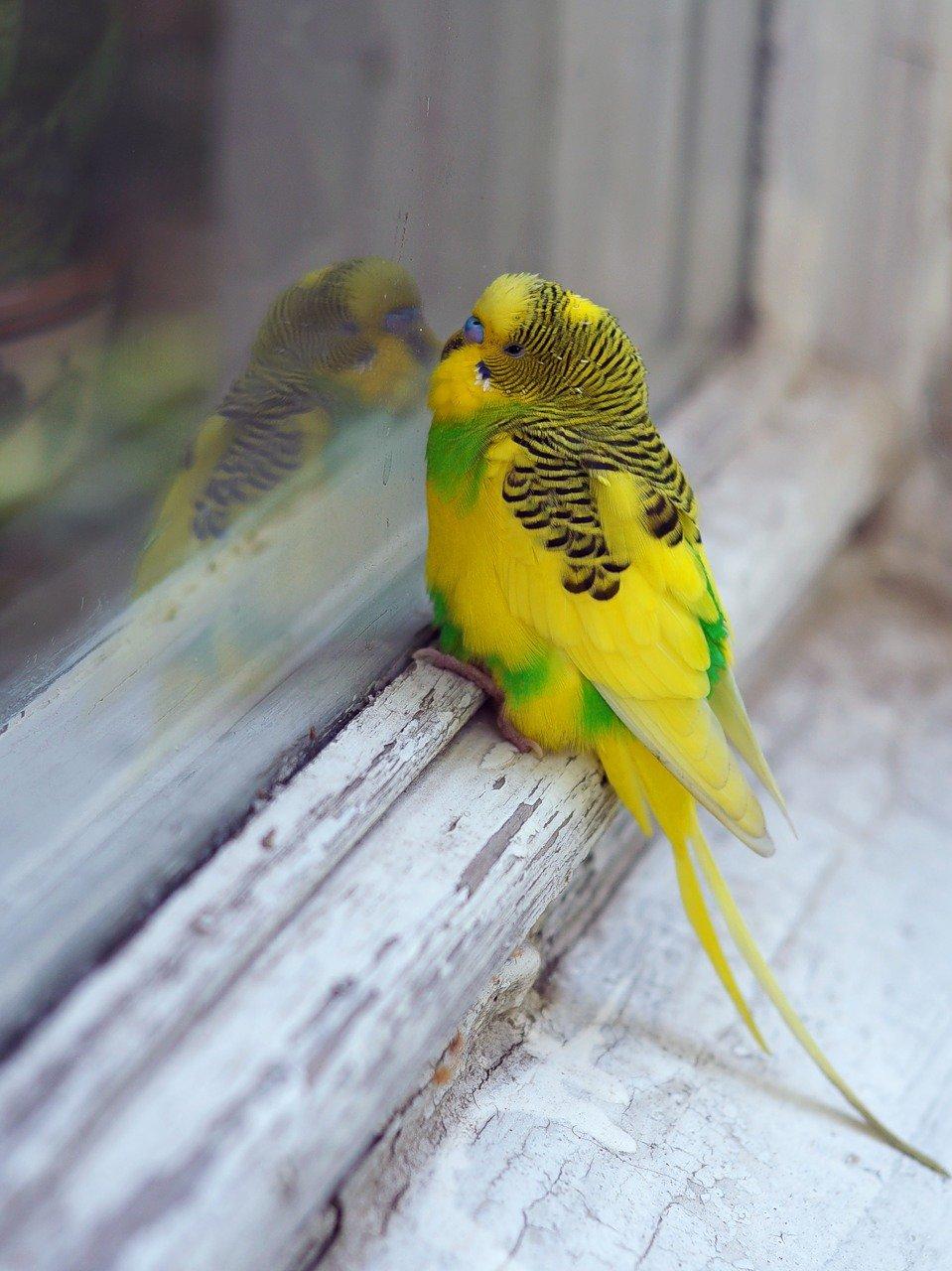 Да я с доброй вестью, пустите, а!#irkinson1309 #ассоциации #окно #попугай #путешественник #путешествие #улетел #улыбнуть