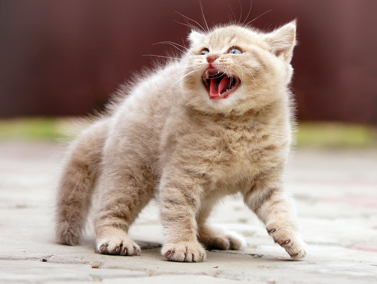 Смешной котик, прикольные марта сестре