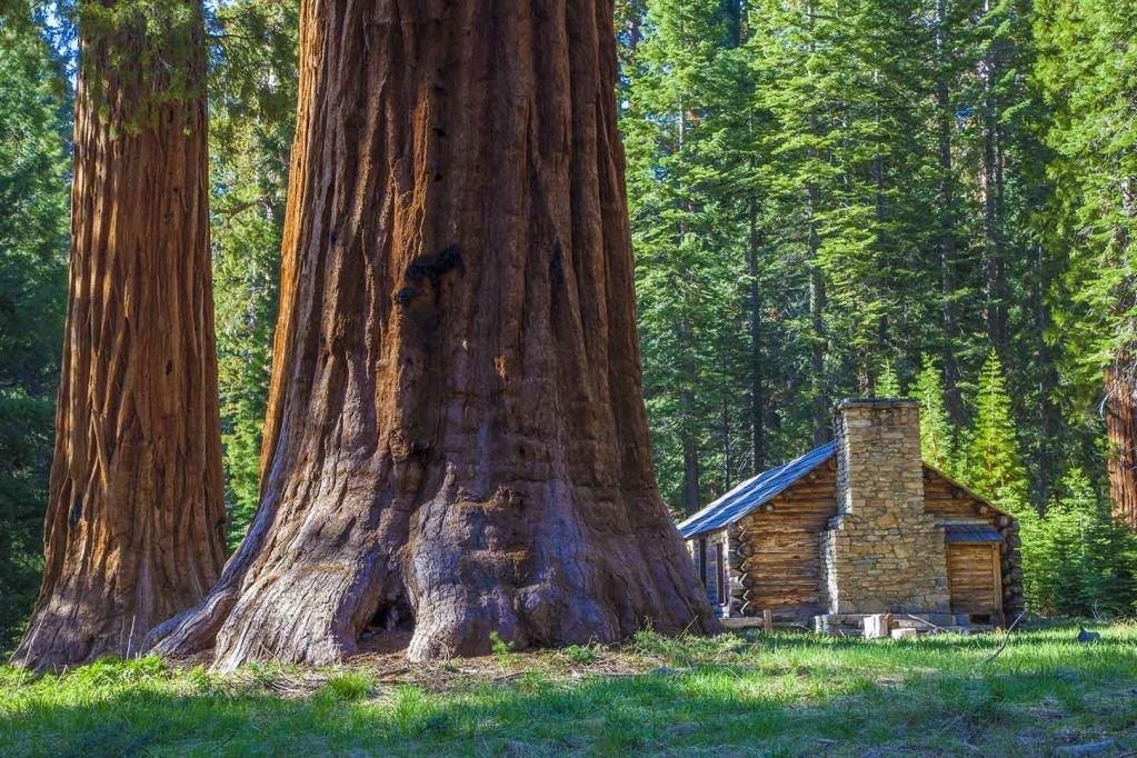 гигантские деревья фото
