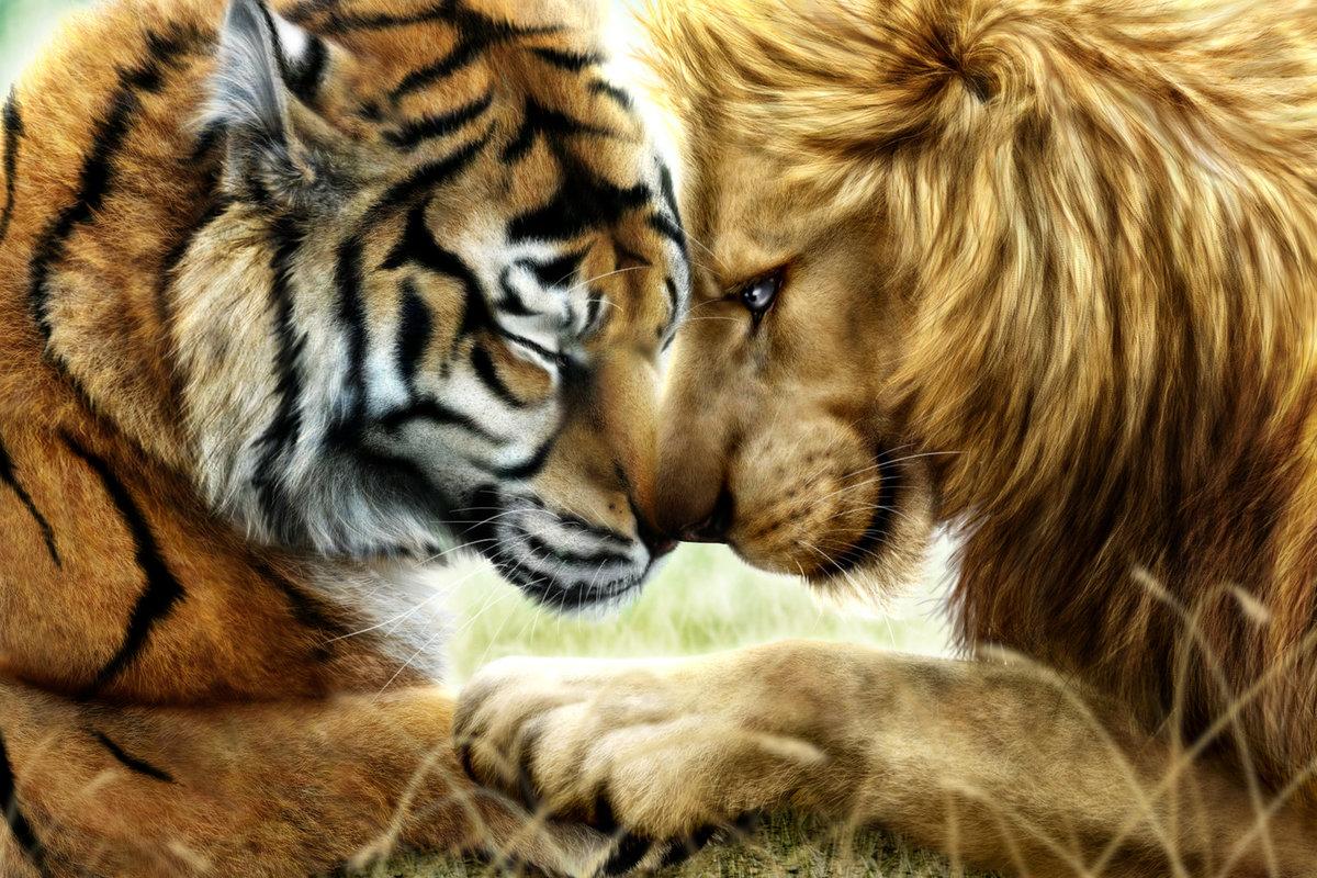 Красивые тигры и львы картинки