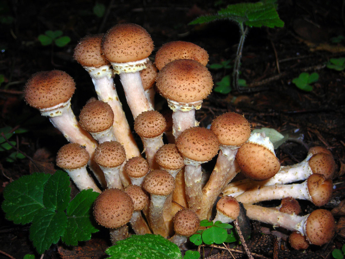 картинки семейка грибов всего