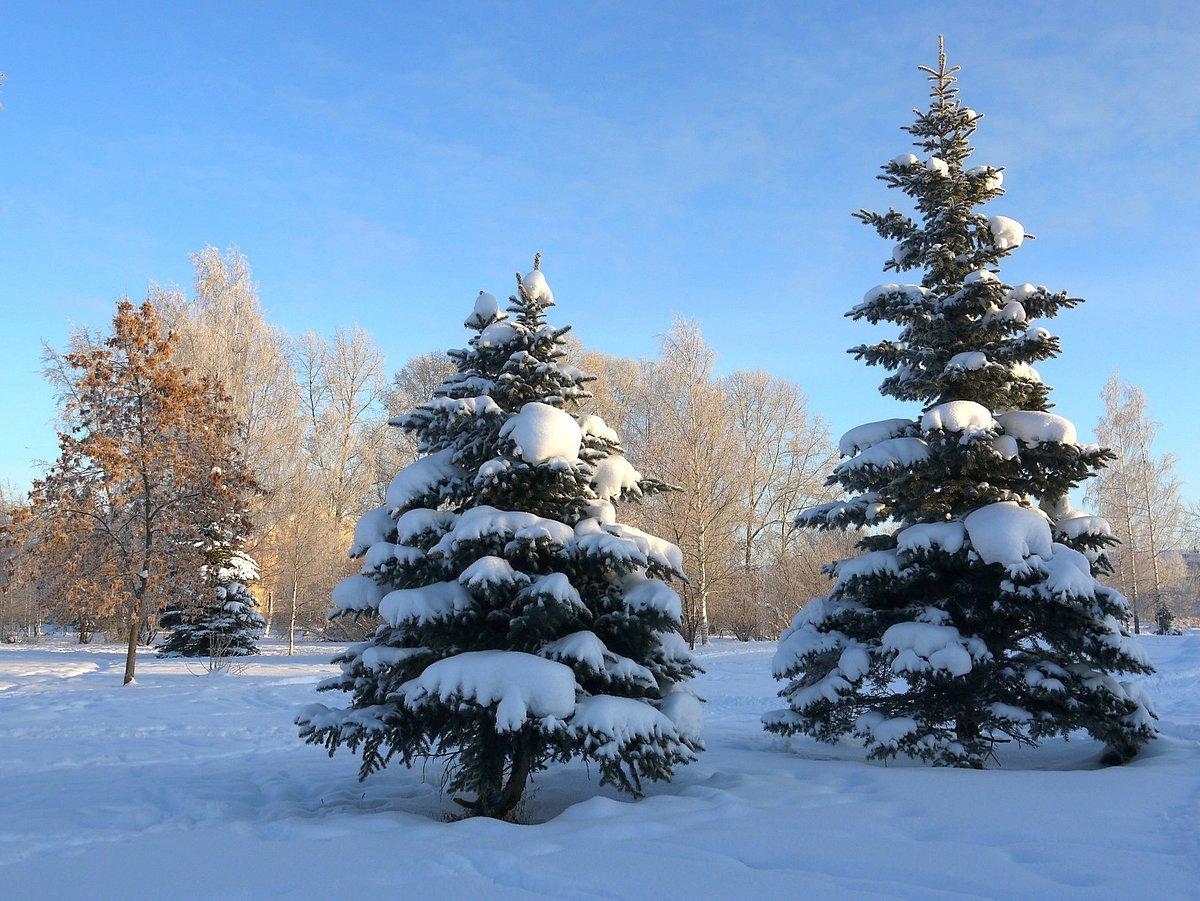 Зима елки картинки
