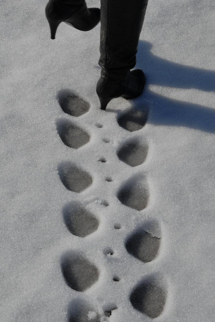 картинки смешные следы на снегу этих
