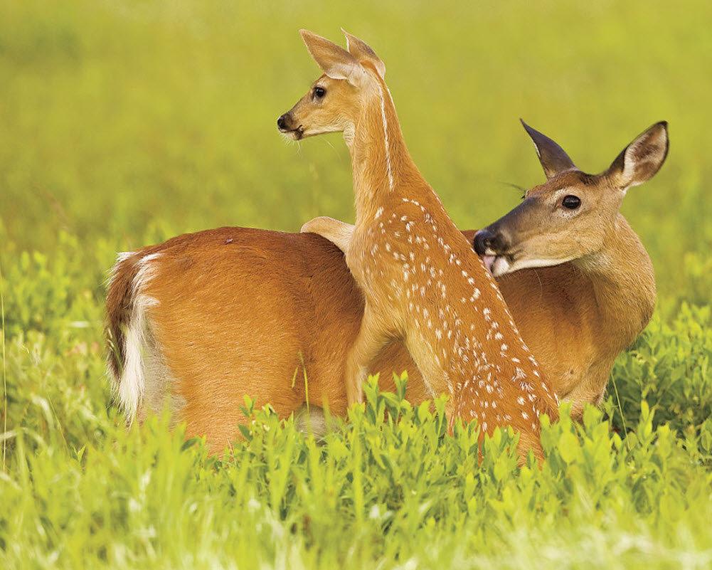 Мама и ребенок животные картинки, про смерть аву