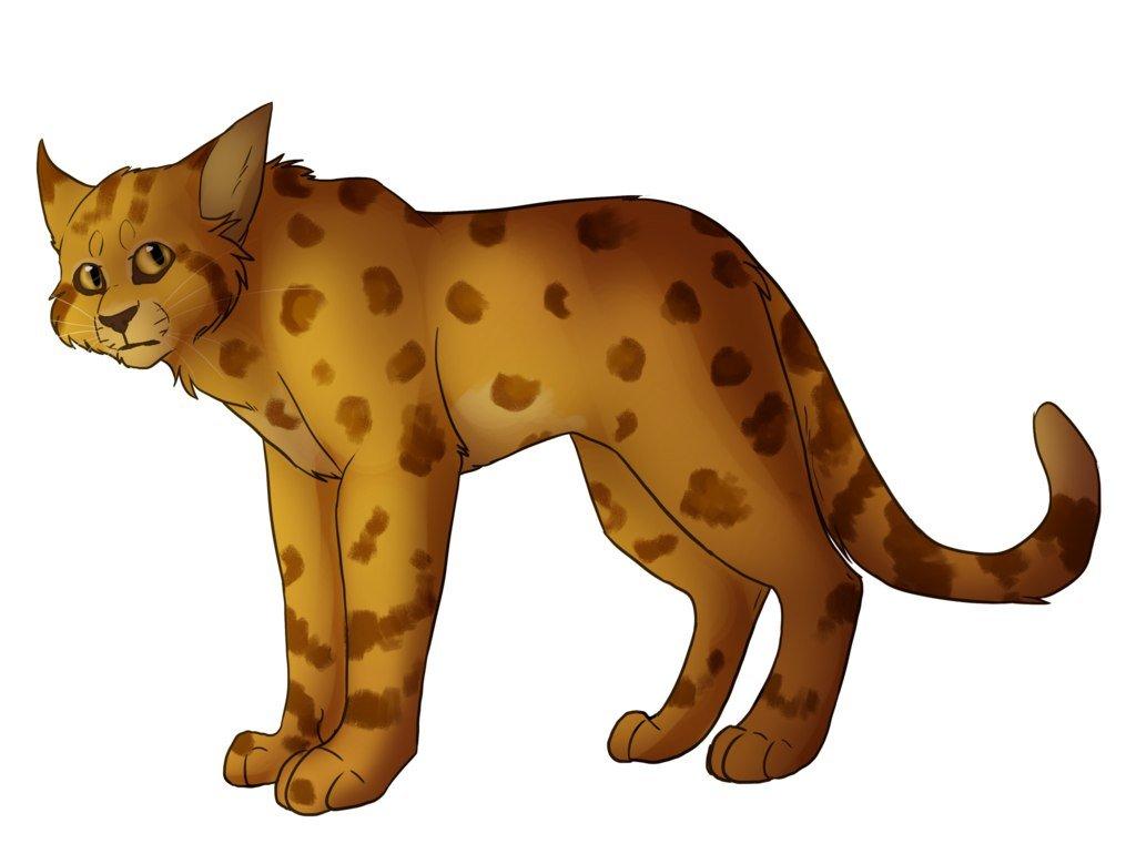 Коты воители картинки с пятнистой звездой