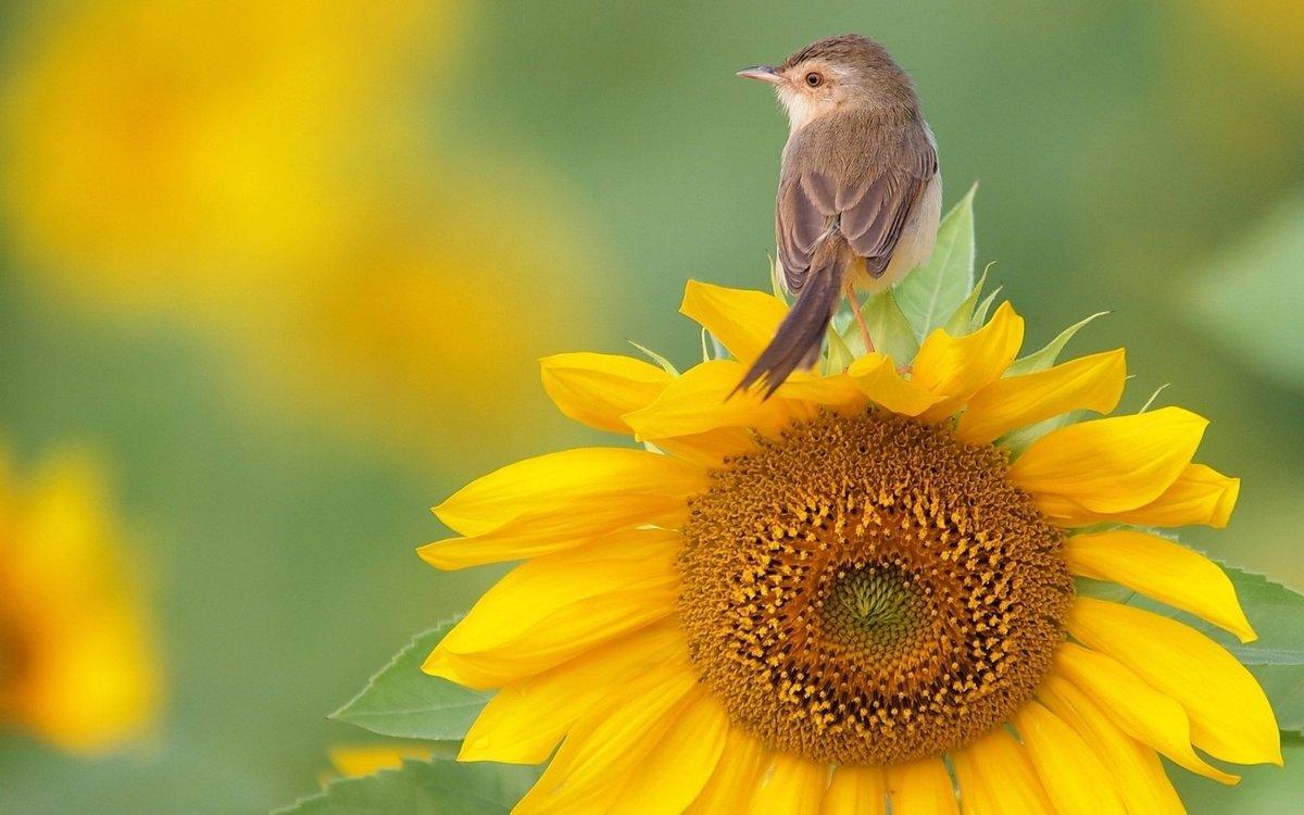 Картинка, картинки природы с добрым утром на телефон