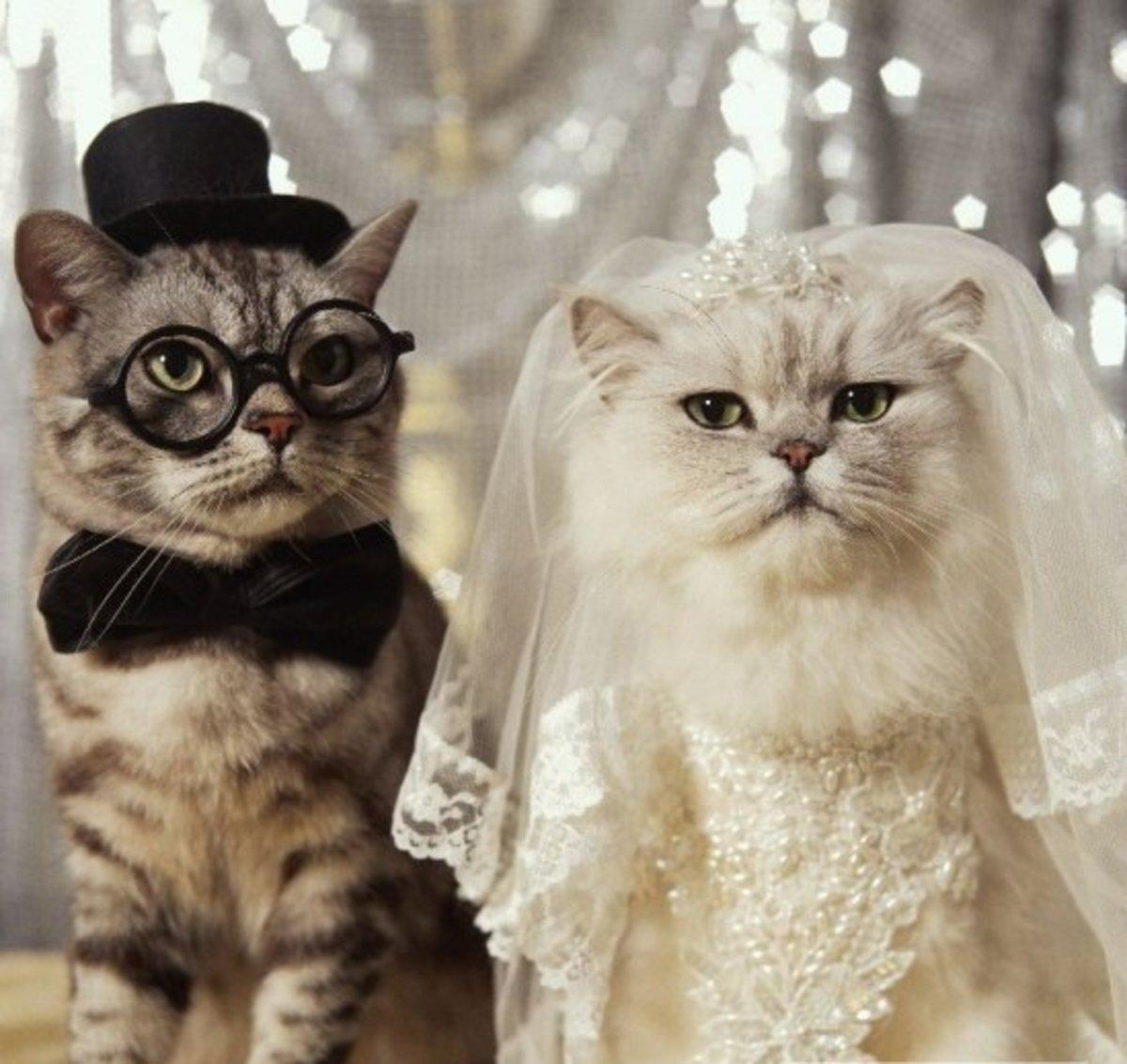 Днем, фото с бракосочетанием прикольные