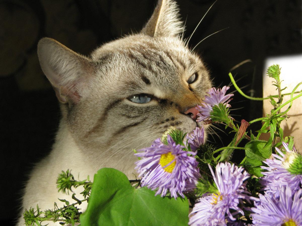 кот нюхает картинки анемоны идеально сочетаются