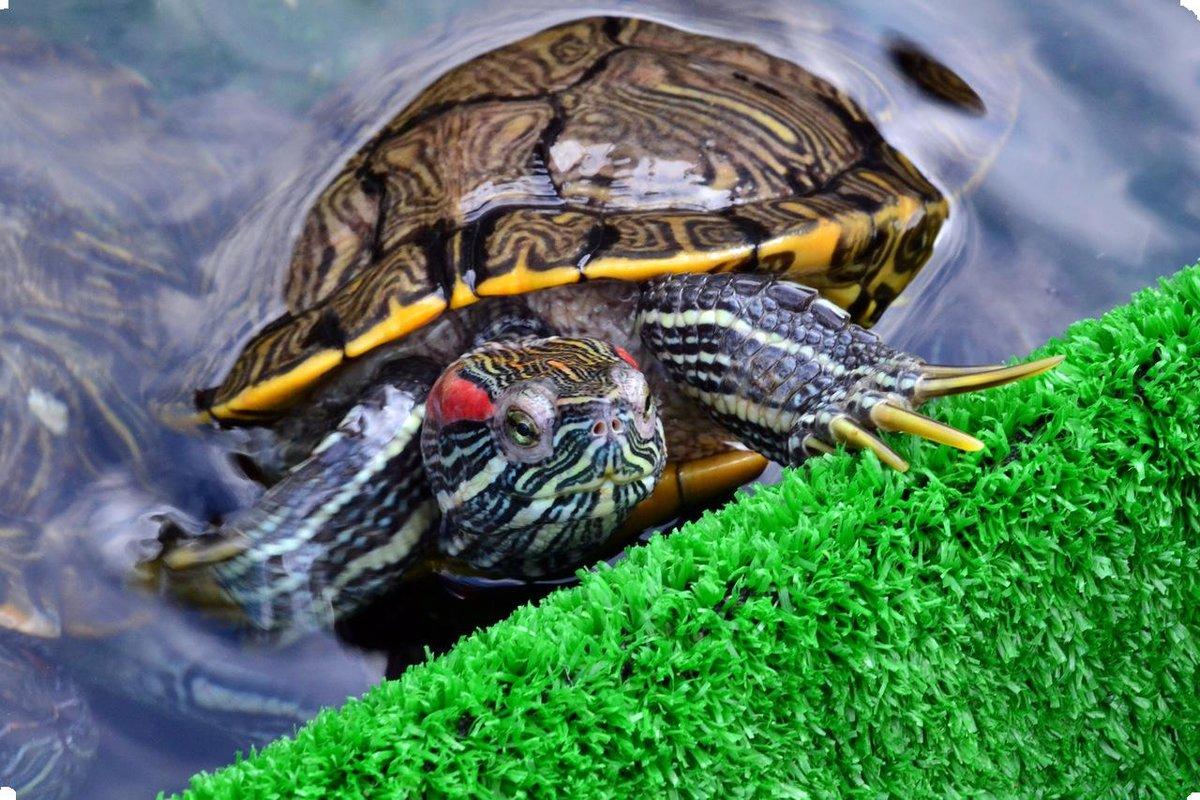 Картинки с черепахами, днем
